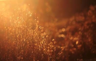 Evening light by LuciaG