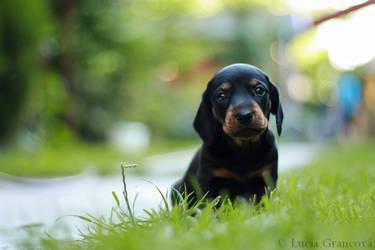 Doggie by LuciaG