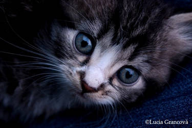 Kitteh by LuciaG