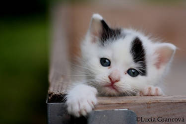 Kitteh s eyes by LuciaG