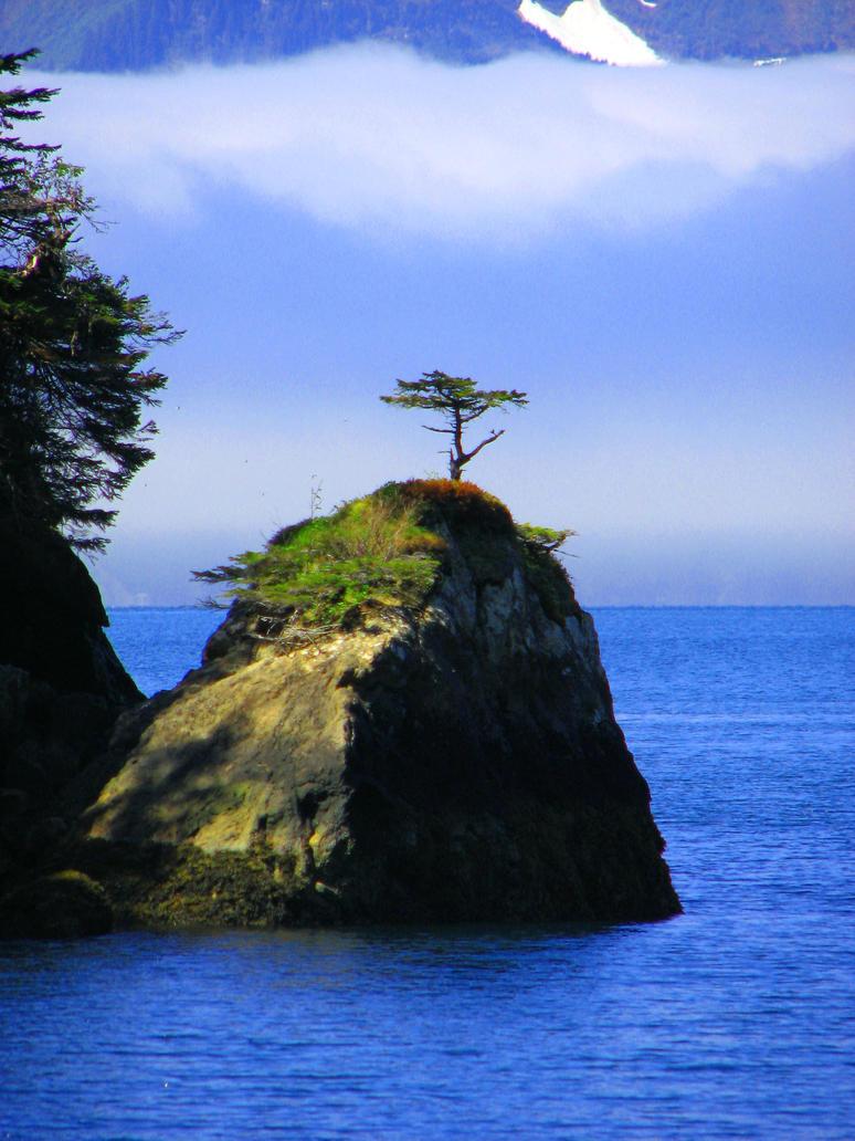 Fox Island Bonsai by BlackGryph0n
