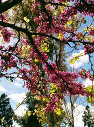 Spring 1 by vlacruz