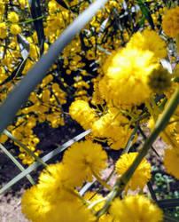 Spring 3 by vlacruz