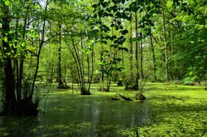 Swamp by Lizalainx3