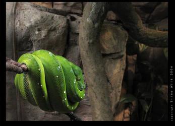 Green by StinaWiik