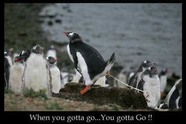 When you gotta go