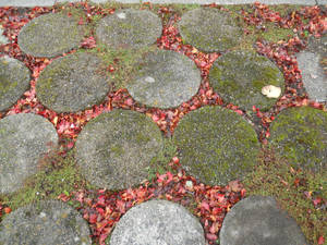 Stone, leaves, and mosssto