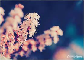 Spring by phferreira