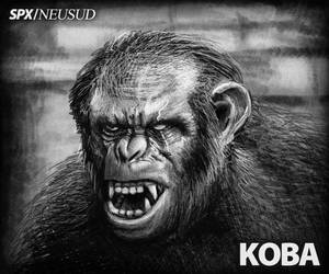 KOBA - bonobo - By ALONESPINOXA by ALONESPINOXA