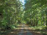 Endless Trail