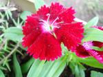 Flowers in A Garden (Three) by YaoiK
