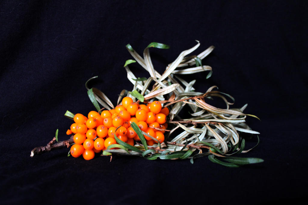 Seabuckthorn by Galiades
