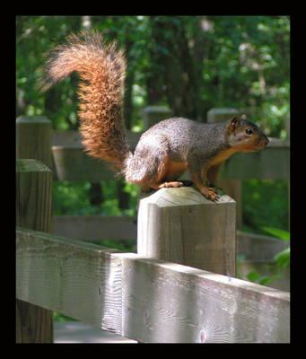 Squirrel by sapphirelotus