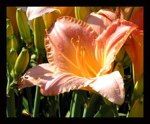 Flower III - Pastel by sapphirelotus