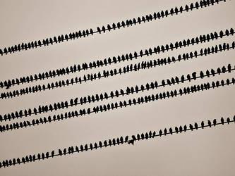 1001 birds by AndrewMaidanik