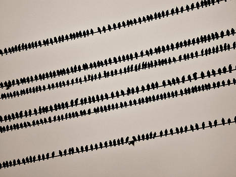 1001 birds