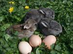 Baby Bunnies by PolaristheCepheid
