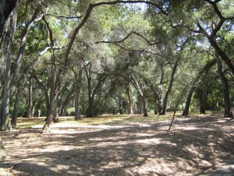 California live oak grove by BlackVulmea