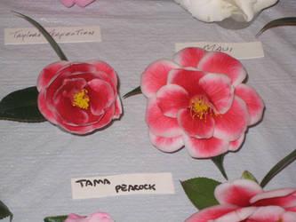 Camellias by BlackVulmea