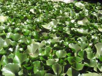 Lily pads by BlackVulmea