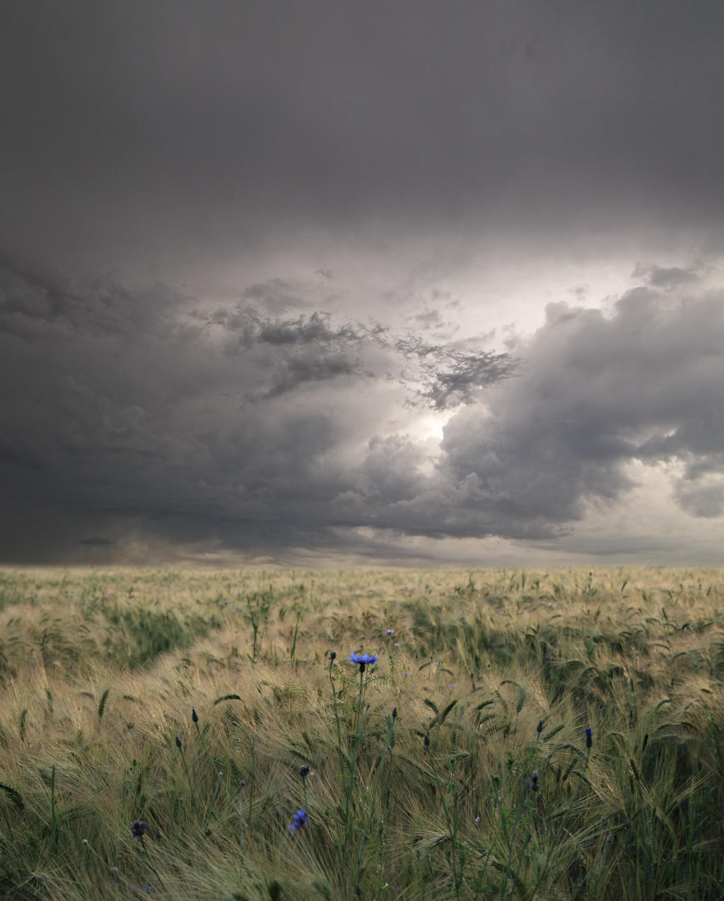 The Field Background by Frederic-Lievre
