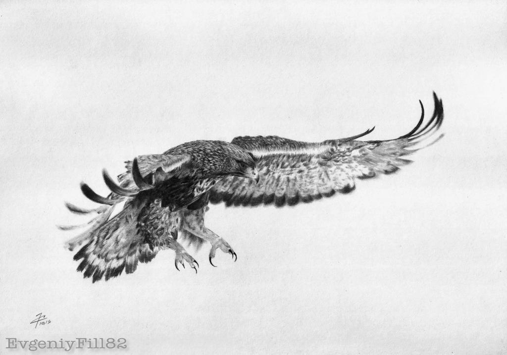 Flight Eagle by evgeniyfill82
