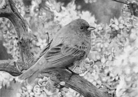 Little bird 5 by evgeniyfill82