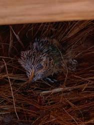 Holt The Baby Hummingbird  by sydneypie