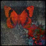 Ab09 Butterfly Dream by Xantipa2