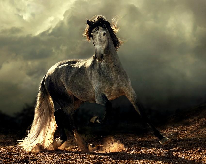 Arabian horse by dania-pena