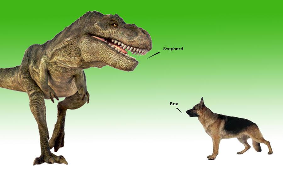 Shep_Rex by TAV15