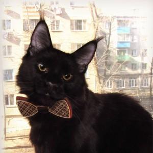 v-vasilinka's Profile Picture