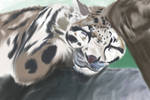 Slumber of the Leopard