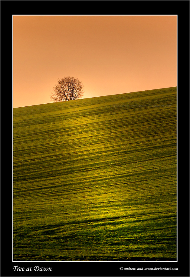 Tree at Dawn by Andrew-and-Seven