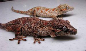 Father Daughter Gargoyle Geckos by LandGart
