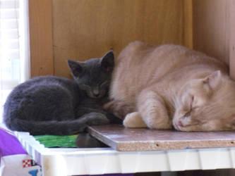 You make a nice pillow Meow! by DarkAngelsRhapsody