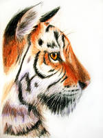 tiger profile by SpartanB214