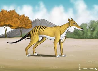 Thylacine 3 by Louisetheanimator