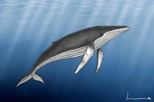 Humpback Whale by Louisetheanimator