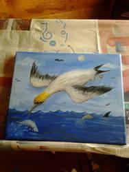 Gannet by Louisetheanimator