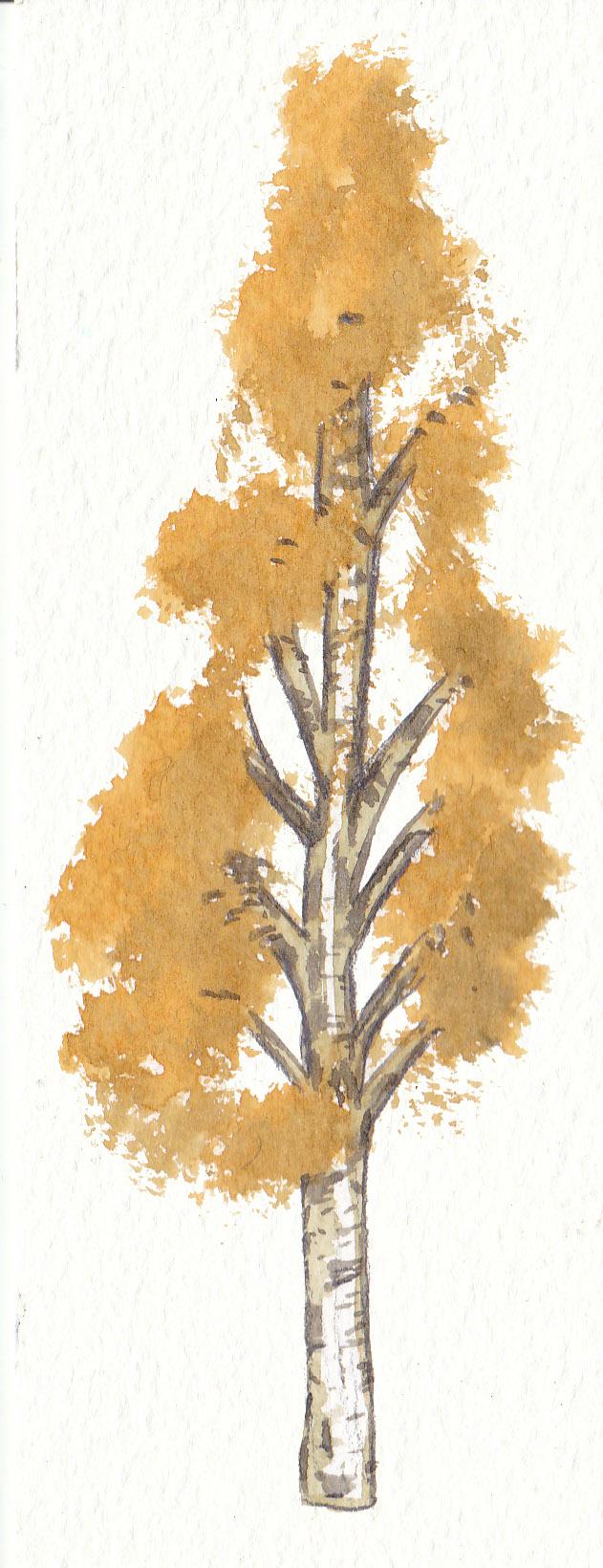 Autumn Birch Tree by Louisetheanimator
