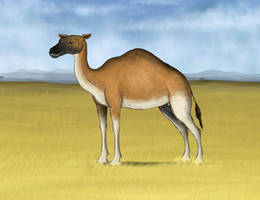 Yukon Giant Camel