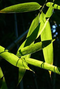 bamboo aesthetic 02