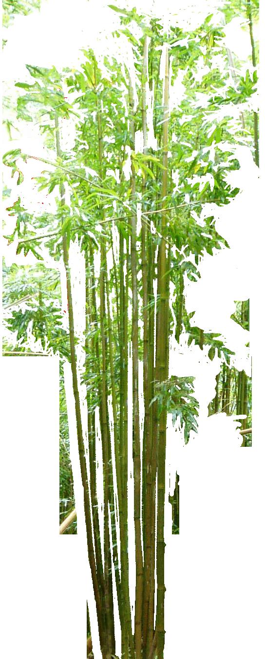 Bamboo Bambou Bambu - cut by Ludo38 on DeviantArt
