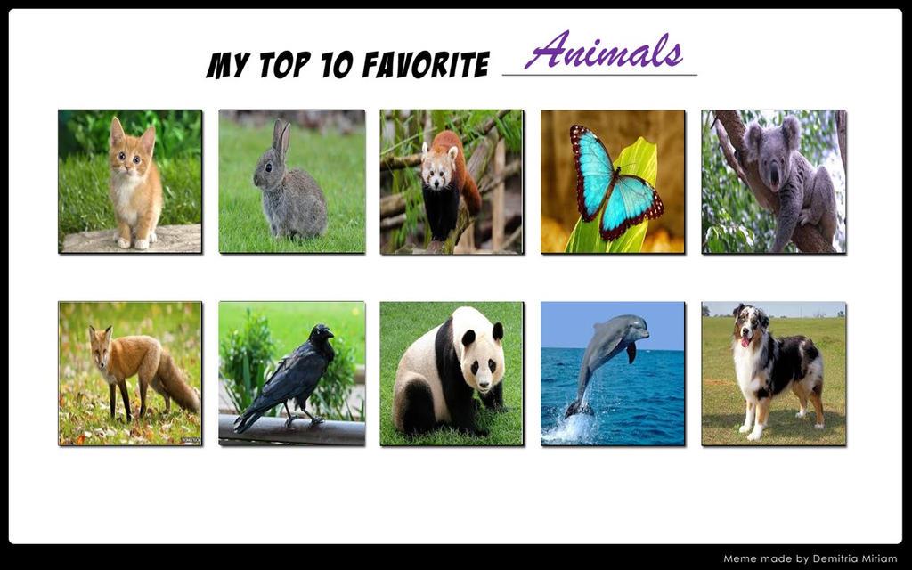 My Favorite Animals by mariosonicfan16 on DeviantArt
