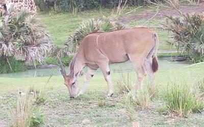 Gazelle by mariosonicfan16