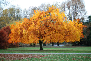 Tree by nakedape
