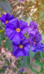 Purple Flowers by Nini1996