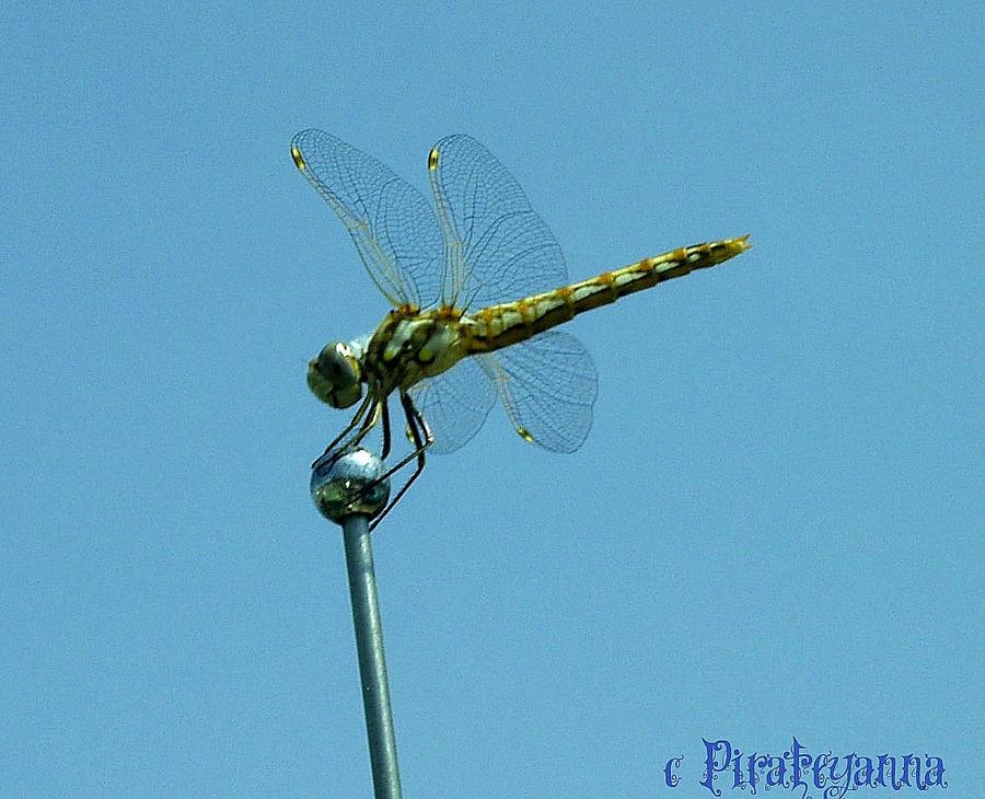 Antenna topper by pirateyanna on deviantart for Antenna decoration