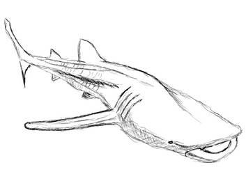 20200129-shark